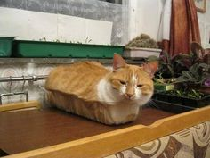 Cat In Bread Box Loaf On Some Boxes  Catloaf  Pinterest