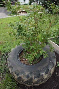 use old tires as garden pots