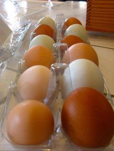 Yenni Ranch  Carton of Brown & Green Eggs