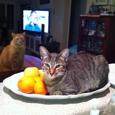 Still life with kitties