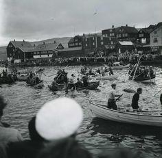 Hunt for pilot whales at Torshavn