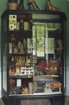 .love the idea of stuff like this - butterflies, ferns, fossils, bugs - mounted in shadow boxes, arranged on the big wall where the frames are in the living room