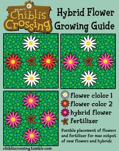 A guide to growing hybrid flowers with fertilizer from least to most effective. Fertilizer will produce 2 or more new flowers.