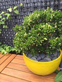 59 Best Plowman Street Garden Images On Pinterest Gardening