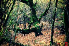 autumn in Epirus by George Xourafas on Color Change, Colours, Autumn, Nature, Plants, Naturaleza, Fall, Plant, Off Grid