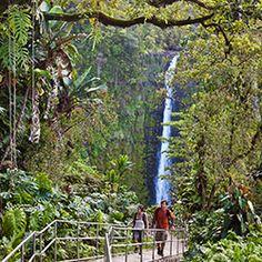 5 Short Hawaii Island Hikes : TravelAge West