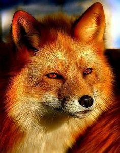 Those foxy eyes