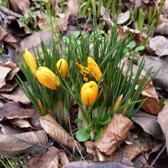 Un petit air de printemps...