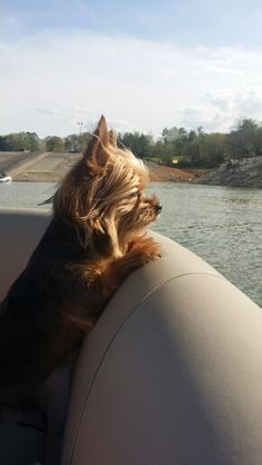Rowdie on our pontoon