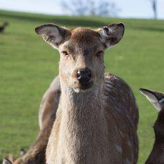 Unamused deer safari park Coventry, Ethereal, Kangaroo, Safari, Deer, Geek Stuff, Writing, Park, Animals