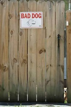 funny-animals-beware-of-dog-signs-6