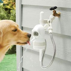 Automatica Dog Drinking Fountain