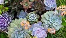 Not only are succulents easy on the eye, they're also easy to grow! Check out this list of succulent pots and tips to grow the perfect plants for your space today! Fool-proof ideas to grow amazing succulents. Large Succulent Plants, Colorful Succulents, Terrarium Plants, Succulent Care, Succulent Pots, Planting Succulents, Propagating Succulents, Pot Plants, Growing Succulents