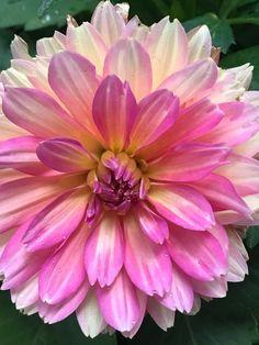 Still Life Flowers, Plants, Plant, Planets