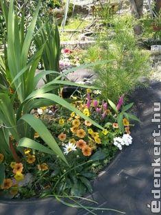 Színkavalkád Traktorgumiban Plants, Plant, Planets