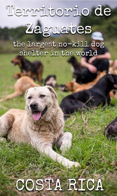 Tips for visiting Territorio de Zaguates in Costa Rica, the largest no kill dog shelter in the world https://mytanfeet.com/activities/territorio-de-zaguates/