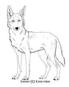 Coyote Coloring Page wwwbtnwildlifeorg Crafty Critters DIY