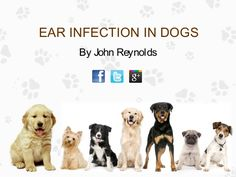 Ear infections are most commonly caused by bacteria and yeast. Ear infections are also of different types. This Presentation gives us information about types, symptoms, causes and prevention of ear infection.