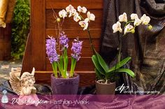 Sneak Peek 2015: Tuesday from Wolf Floral!  @Drish_photo