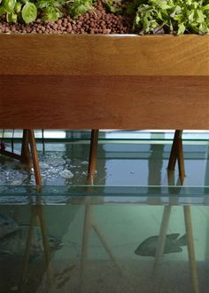 Aquaponics. Let bacteria keep your fish tank clean and feed your plants. Love it!