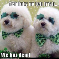 Happy Saint Patrick's Day!  Lol #977