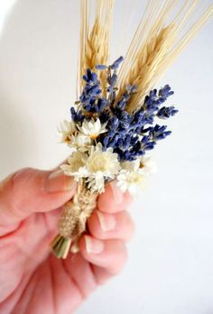 LAVENDER BOUTONNIERE-Dried Flower Boutonniere-Lavender / Wheat / Star Flower Boutonniere A simple boutonniere for rustic country style wedding. Featuring dried lavender, blonde bearded wheat and cream Star Flower. The bundle ties together with burlap an Floral Wedding, Fall Wedding, Wedding Bouquets, Our Wedding, Wedding Flowers, Rustic Wedding, Wedding Ideas, Lavender Boutonniere, Rustic Boutonniere