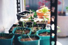 Starting from seed — Studio Home Seed Raising, Growing Sweet Peas, Growing Seeds, Seed Packets, Nigella, Seed Starting, Growing Flowers, Home Studio, Zinnias
