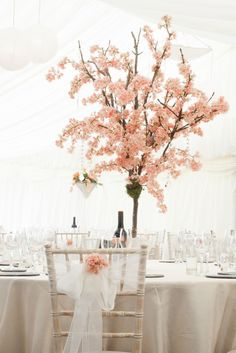 Cherry blossom trees for hire Chillie Breeze