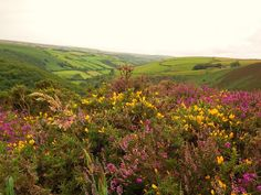 Exmoor National Park | Things to Do at Easter | Smythen Farm Holiday Cottages | http://www.smythenfarmholidaycottages.co.uk/devon-holiday-cottage-blog/whats-on-exmoor-easter