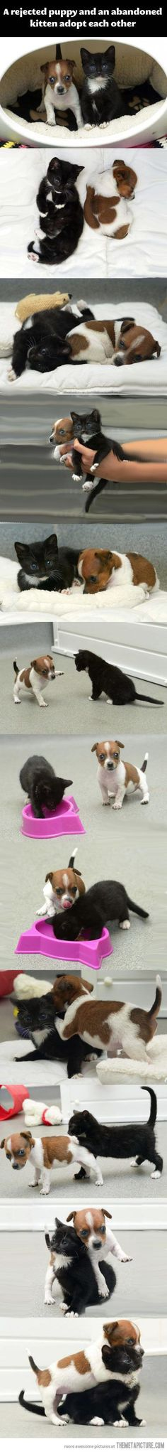 A rejected puppen and abandoned kitten adopt each other.