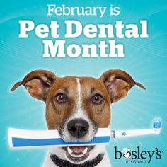 An astounding 80% of dogs and 70% of cats show signs of oral disease by age three. As February is Pet Dental Month, this is a great time to do something about it. www.bosleys.com/blog