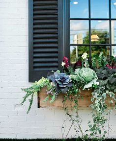 If you want to make the most out of your window box, you need to design it properly. Need ideas to style your window box? Check out our 17 list window box ideas Fall Window Boxes, Window Box Flowers, Fall Flower Boxes, Window Box Diy, Outdoor Flower Boxes, Window Sill, Flower Ideas, Fall Containers, Window Planter Boxes