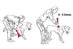 Pet first aid techniques