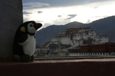 Potala Palace. Lhassa, Tibet. Tibet, Belgium, Penguins, Palace, Mini, Travel, Animals, Animales, Trips