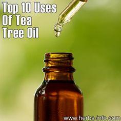 Top 10 Uses For Tea Tree Oil - Blog