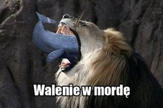 "Awesome Joke in Polish :) ""Walenie w morde"" means punch in the face :) Litteraly means also whale in mouth :D"