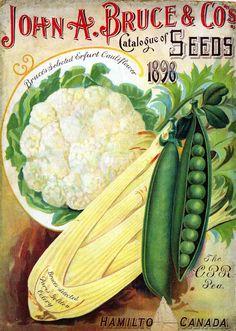 John A Bruce & Co's. seed catalog - Hamilto Canada - circa 1898