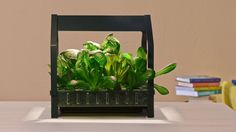 Ikea Wants to Put a Hydroponic Garden in Every Home Kitchen - Eater