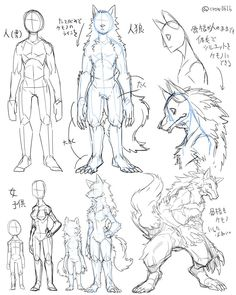 簡単な人狼の描き方。 仕事で衣装や差分の関係上、人間の骨格の人狼を描かなくちゃならなくなった時に、先方に骨格そのままでより良く見える方法として提示したメモ。 完成例→ http://pbws.jp/?html=beginner/kresnik.html…