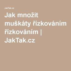 Jak množit muškáty řízkováním   JakTak.cz