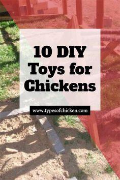 Best 10 DIY Toys ideas for your chickens! Diy Chicken Toys, Chicken Home, Best Chicken Coop, Homestead Survival, Survival Skills, Get Rid Of Flies, Chicken Feeders, Raising Backyard Chickens, Chicken Breeds