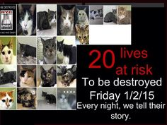 #URGENT #NYC #CATS Pls share each of the 20 babies @ risk! Pls help them survive the new year! http://m.facebook.com/PetsOnDeathRow