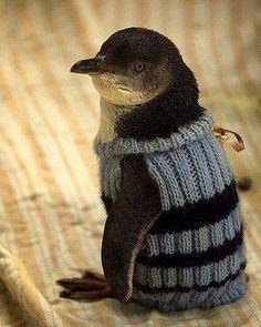 Penguin Planet