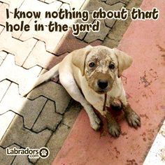 """How cute is he???? / """"I know nothing..."""" #dogs"""
