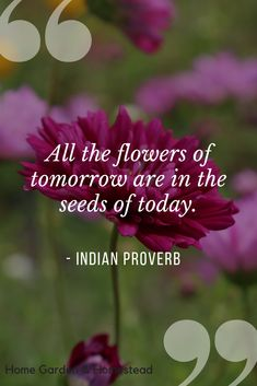 Ordering flower seeds and dreaming of spring is my favorite winter past time! Short Nature Quotes, Mother Nature Quotes, Wisdom Quotes, Life Quotes, Buddha Quotes Inspirational, Sunshine Quotes, Love Puns, Gardening Quotes, Positive Inspiration