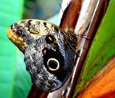 ¿Quien no se ha parado a observar una mariposa? Maria Alia Martin nos envía esta foto tomada en Tenerife