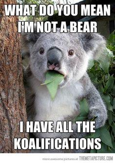 Bahaha! Koalafications...