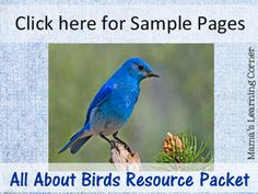Birds Resource Packet with tons of info: links to best sites, videos, books & 11 worksheets for 1st-3rd graders from Mama's Learning Corner.