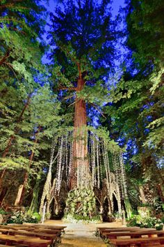 Romance in the Redwoods - A Forest Wedding Redwood Forest Wedding, Enchanted Forest Wedding, Wedding Scene, Wedding In The Woods, Wedding Ceremony, Woodland Wedding Inspiration, Wedding Ideas, Wedding Blog, Rustic Wedding