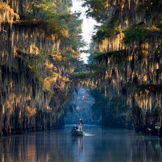 Caddo Lake in Texas was named one of the South's Great Lakes by Southern Living! Few lakes envelop their visitors like Caddo. Pristine water spreads oil-black and disappears beneath lush green water lilies while it wraps around the trunks of bald cypress. With so many unique species found in the water, you'd think it was a major port-of-call for Noah's Ark.